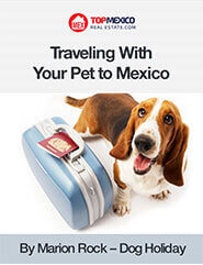 Traveling With Your Pet to Mexico